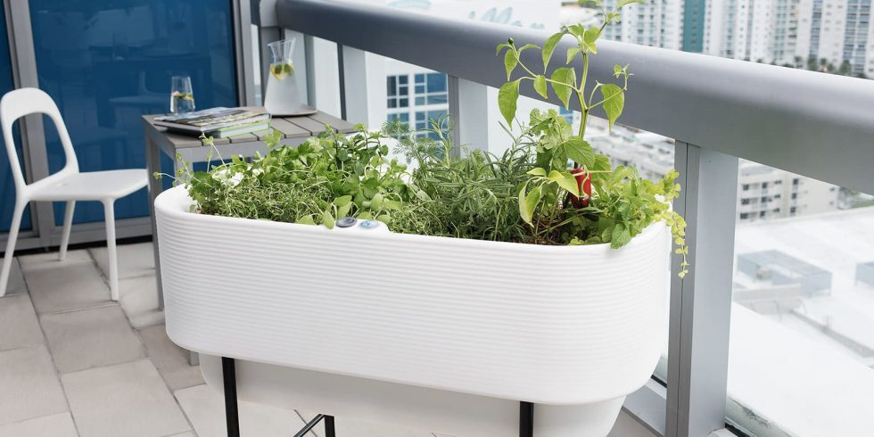 HEADER-No-Space-No-Problem-with-Container-Gardening-1-1620x810